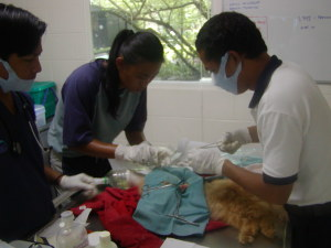 Animal Care-Cat