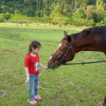 Halle feed horse